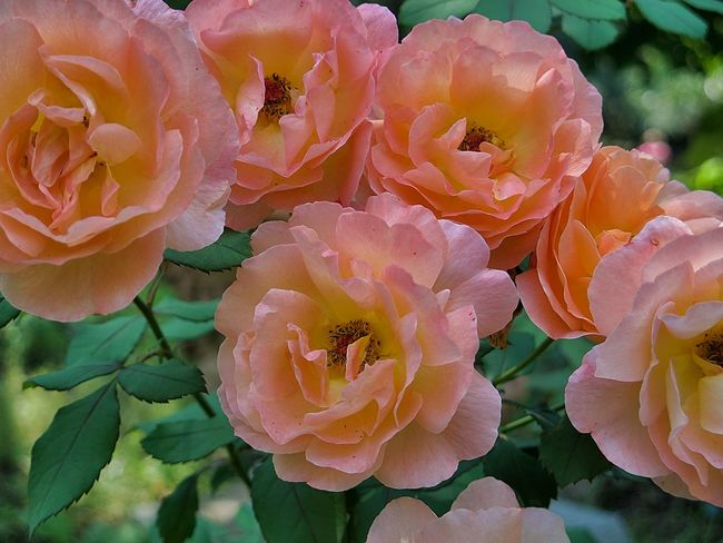 Botanical Gardens Florence Italy Italian Garden Tuscany Boboli Garden Colours Of Nature Flowers Palazzo Pitti