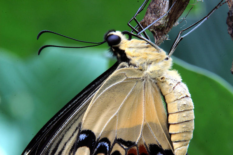 Animals Live Beauty In Nature Butterfly - Insect Cocoon Insect Nature Nectar One Animal