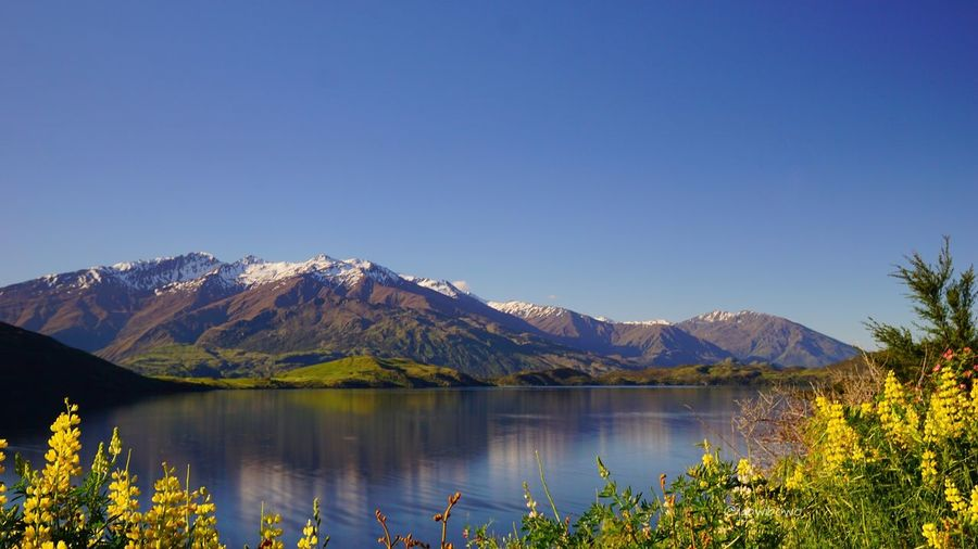 ice capped mountain with its reflection on thd Wanaka lake water surface Portfolio Of Arif Wibowo Photograph By Jgawibowo Portfolio Of Jgawibowo Nature Green Nature Wanaka Wanaka New Zealand Glacier Reflection Ice Capped Mountains Lake Lavender Clouds And Sky Water Tree Mountain Clear Sky Flower Lake Reflection Sky Landscape Mountain Range Tranquil Scene Countryside Lakeshore Tranquility Snowcapped Mountain Snowcapped Scenic View