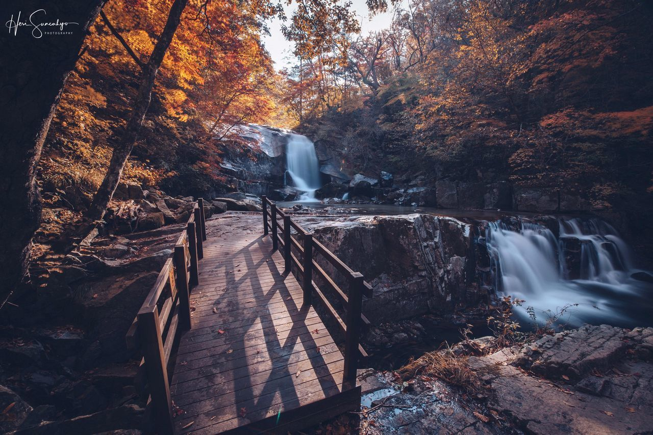 tree, forest, nature, plant, land, motion, no people, beauty in nature, long exposure, scenics - nature, autumn, water, day, waterfall, outdoors, change, blurred motion, rock, tranquility, flowing water, flowing, power in nature