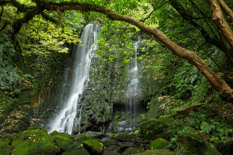 Matai Falls Tree Forest Plant Waterfall Scenics - Nature Water Beauty In Nature Long Exposure Land Motion Flowing Water Environment Rainforest Growth Rock Moss Green Color Blurred Motion No People Outdoors WoodLand Flowing Power In Nature New Zealand
