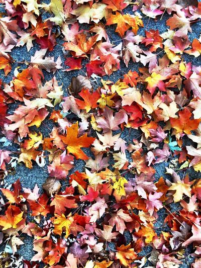 IPhoneography Full Frame Backgrounds Multi Colored No People Pattern Art And Craft Abundance Day Autumn Close-up Creativity Outdoors Variation Textured  Nature Natural Pattern Plant Part Leaf Large Group Of Objects Beauty In Nature