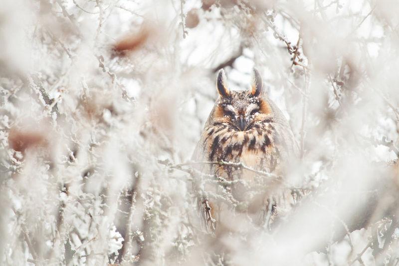 Bird Perching On Tree During Winter