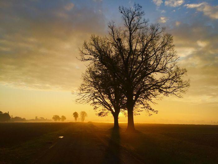 Silhouette Bare Tree On Landscape Against Sunset Sky