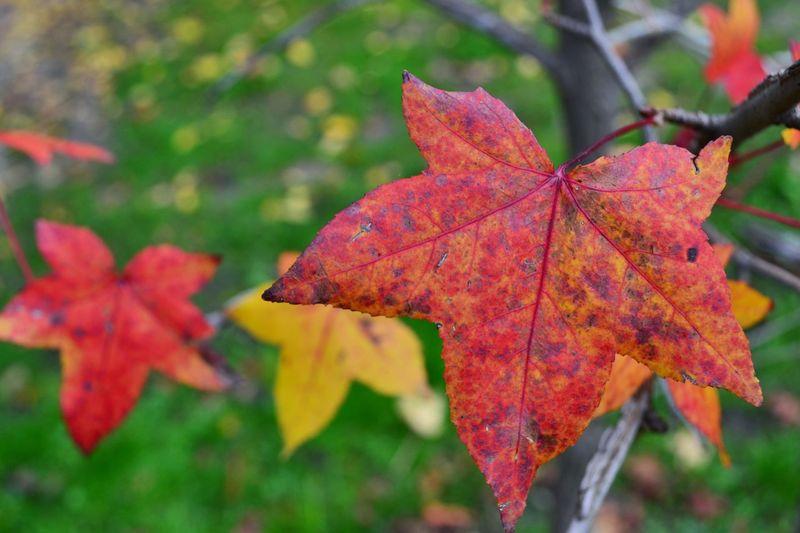Autumn Colors Autumn Bulgaria