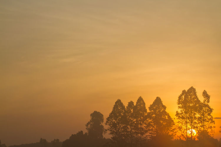Beauty In Nature Cloud - Sky Copy Space Growth Idyllic Nature No People Non-urban Scene Orange Color Outdoors Plant Scenics - Nature Silhouette Sky Sun Sunset Tranquil Scene Tranquility Tree