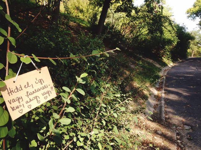 TodaysMessage Message Secret Garden Secret Note ForEveryone Translate