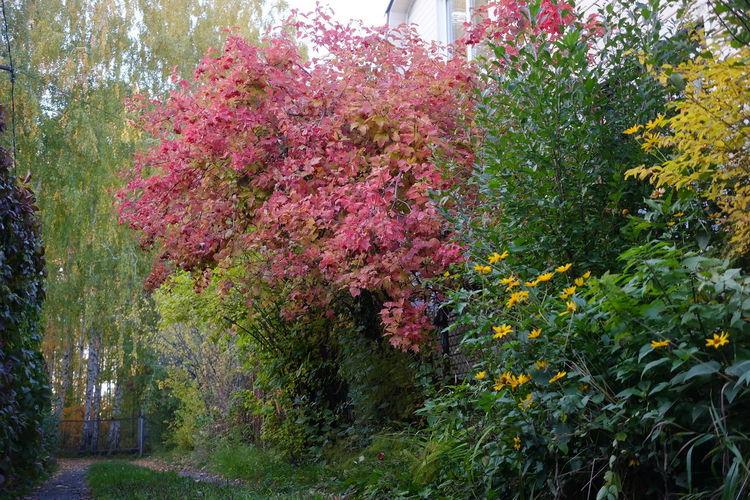 Pink flowering tree by bush