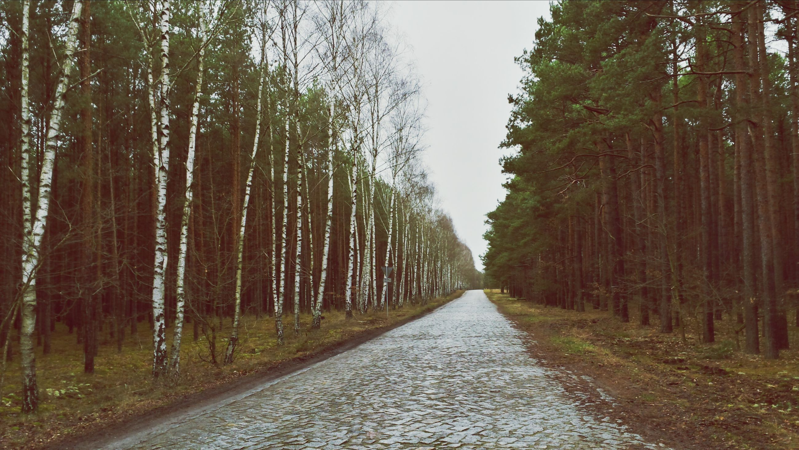 the way forward, tree, diminishing perspective, vanishing point, treelined, tranquility, tranquil scene, tree trunk, growth, nature, road, forest, beauty in nature, footpath, scenics, long, empty road, day, in a row, outdoors