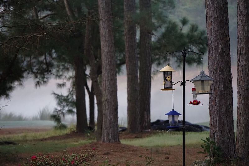 Bird feeders in a morning spring fog. Fog Foggy Morning Springfog Birdfeeding Spring Morning Showcase April