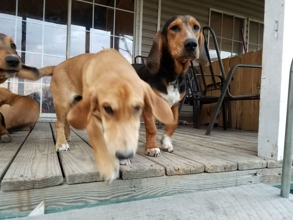 Dog Pets Domestic Animals Animal Mammal Animal Themes No People Outdoors Day HoundDog Moving Movement Running Brown Copy Space Backgrounds Background Cute Friend Togetherness Uniqueness Intentional Blur Let's Go. Together. Breathing Space
