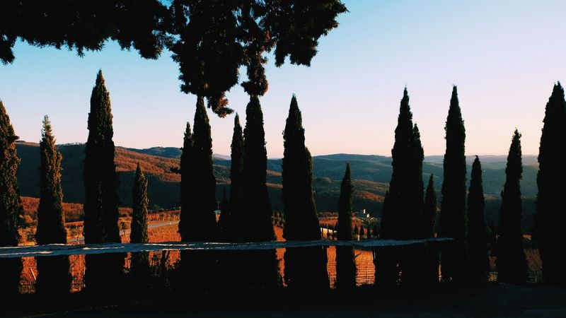 Chianti,Toscana, dicembre 2016 Sky Sunset Tree Outdoors Architecture Nature Day Toscana Nature Tuscany Countryside Wine Tasting Beauty In Nature Tranquility