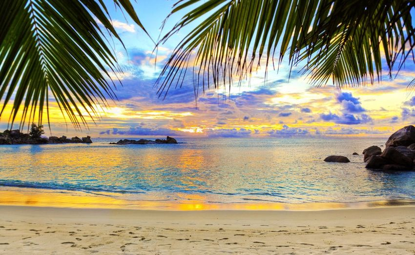 Beach Sea Water Sand Sky Outdoors Horizon Over Water Scenics Idyllic Beauty In Nature Palm Tree Sunset Nature Tranquility Human Body Part Travel Destinations Cloud - Sky Tranquil Scene No People Day Wolfie Wolfies Night Adult