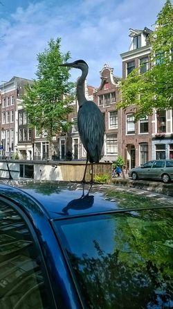 Heron cinerino in Amsterdam