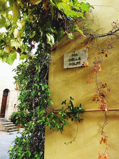 Italy❤️ Tuscany