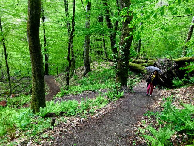 Beauty In Nature Exploring Footpath Forest Forestwalk Full Length Girl Green Krasnaya Polyana Leisure Activity Lifestyles Lush Foliage Nature Non-urban Scene Outdoors Russia Sochi The Way Forward Tourism Vacations WoodLand тропа здоровья Feel The Journey