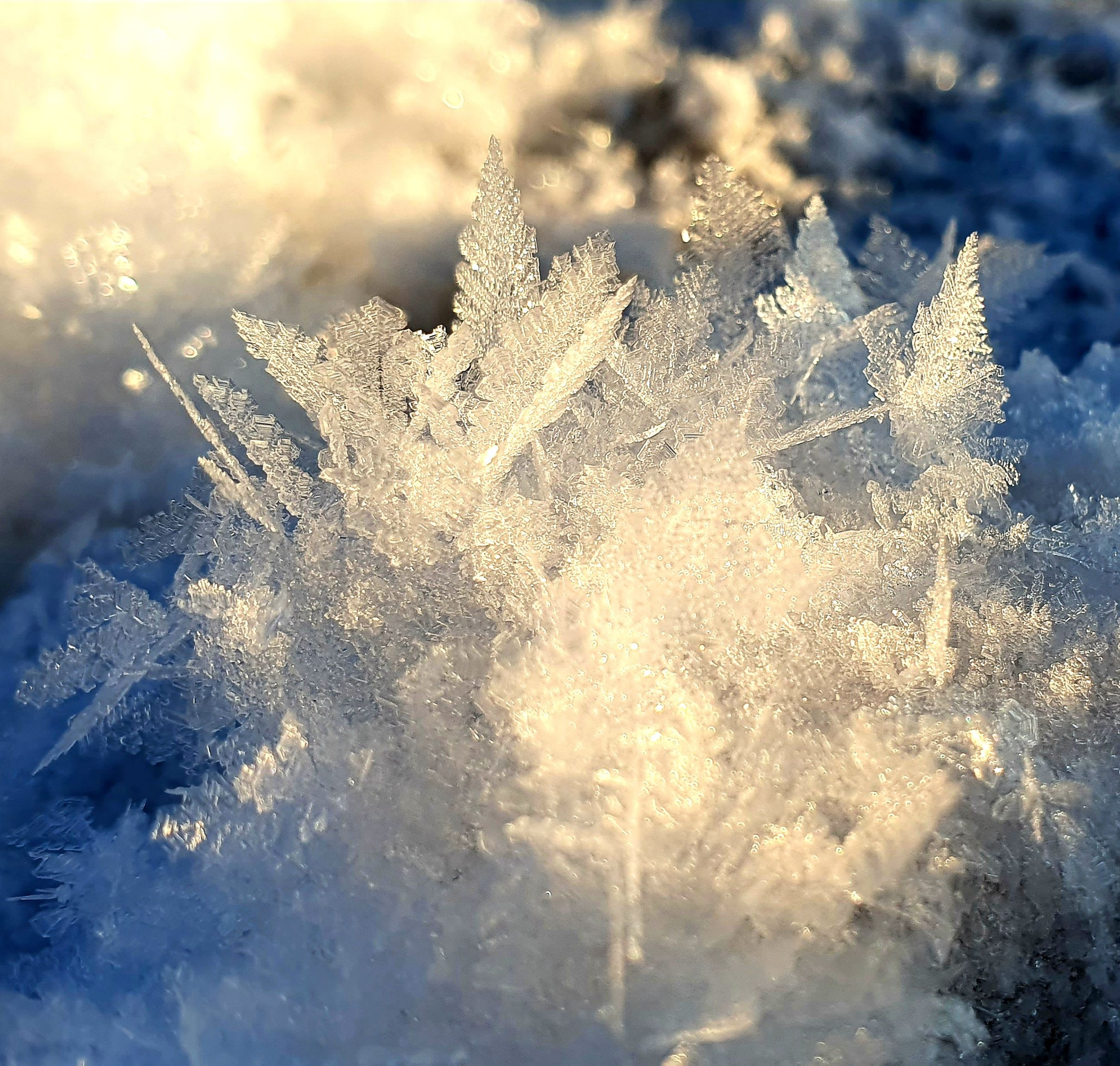 frost, freezing, winter, sunlight, nature, cold temperature, snow, frozen, ice, snowflake, sky, reflection, no people, close-up, cloud, beauty in nature, macro photography, branch, outdoors, tree, water, environment, backgrounds, day, plant, blue