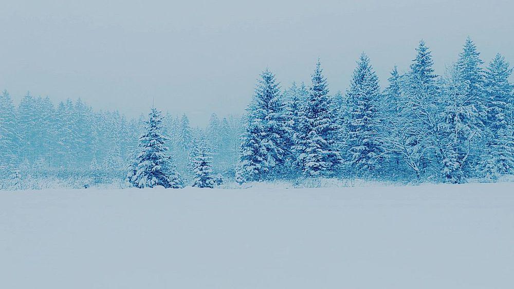 Winterwonderland Austria Upperaustria No People Landscape Outdoors Almsee Snow Walk