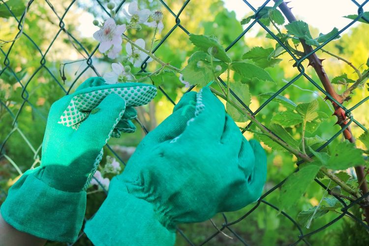 Working in the Garden Green Color Growth Leaf Plant Fruit Tree Outdoors Day Human Hand Nature Food One Person Close-up Freshness People Working Woman Working With Hands Working Hands Working In The Garden Working In My Garden Garden Human Body Part Gloves Garden Gloves