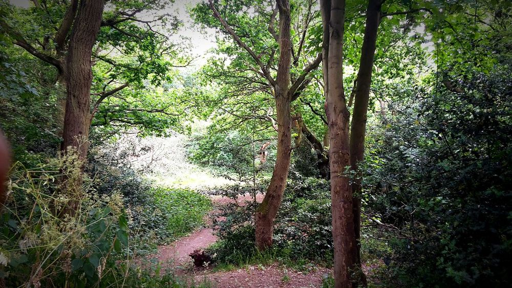 Nature Forest Trees Eppingforest Enjoying Life Summer Love Awesome London Relaxing
