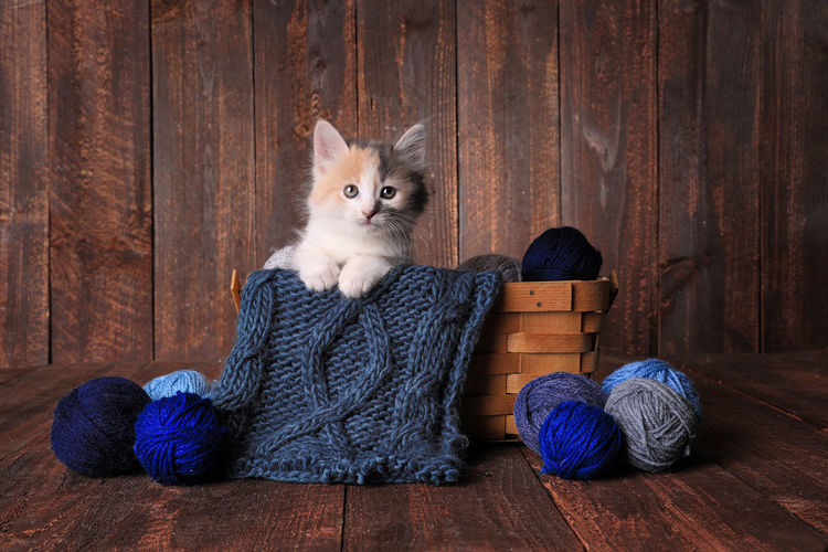 Cat sitting on wooden floor
