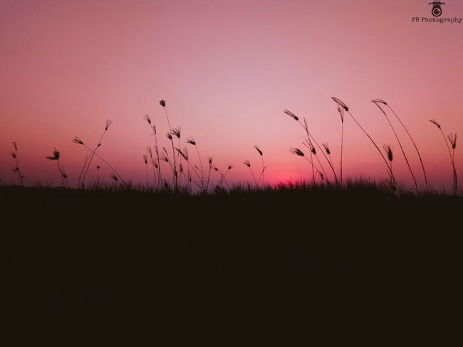 Tailgrass Sunset beach Evening grass beautifulscene aftersunset sky blue pink orange colour beauty in Nature Nature outdoors sky sun no people sunset first eyeem photo beach Beauty In Nature Nature Outdoors Sky Sun No People Sunset First Eyeem Photo Beach Silhouette Tail Grass Nightphotography