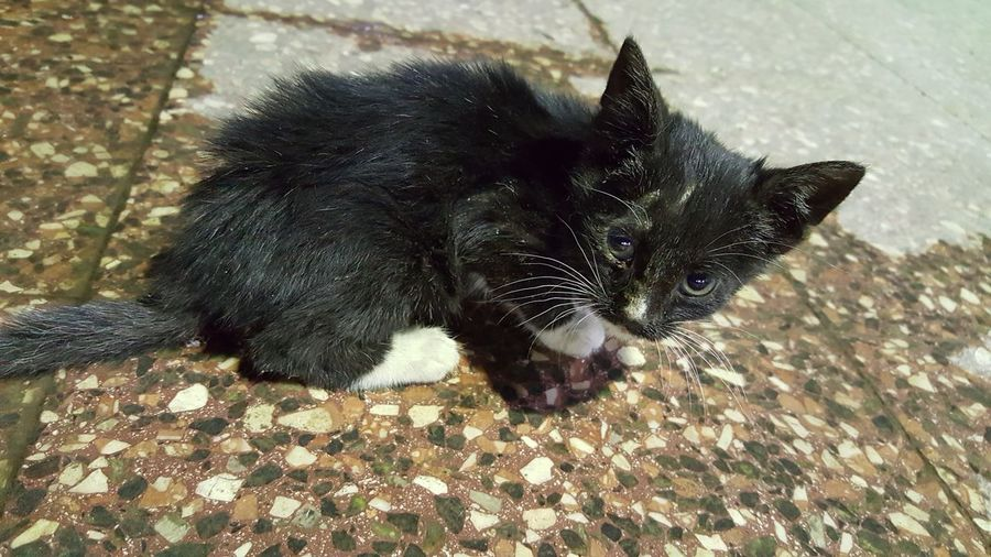 Baby cat Cat Small Little Animal Alone Time Homeless Weakness Sadness😢 Baby Wet Floor