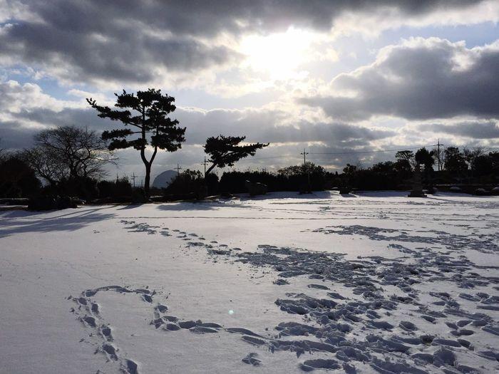 Snow covered Jeju.. 카멜리아힐에서.. Enjoying Life Cloud And Sky Snow ❄ Snow And Tree Beautiful View Iphone6plus Trip Photo Landscape JEJU ISLAND  Jeju