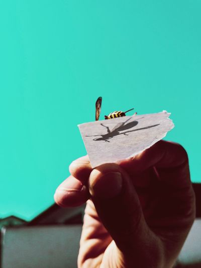 Bee on a hand against blue sky