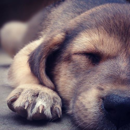 A DOG HAS ONE AIM IN LIFE. TO BESTOW HIS HEART.
