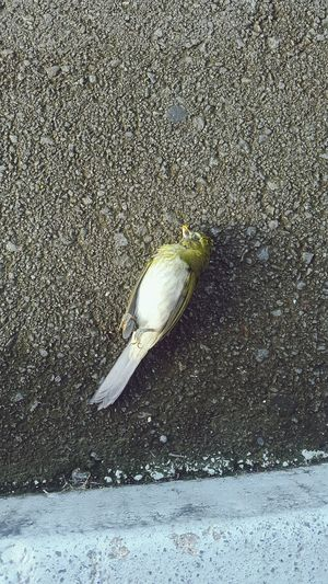 Death... untimely... Bird Death Road Deadbird