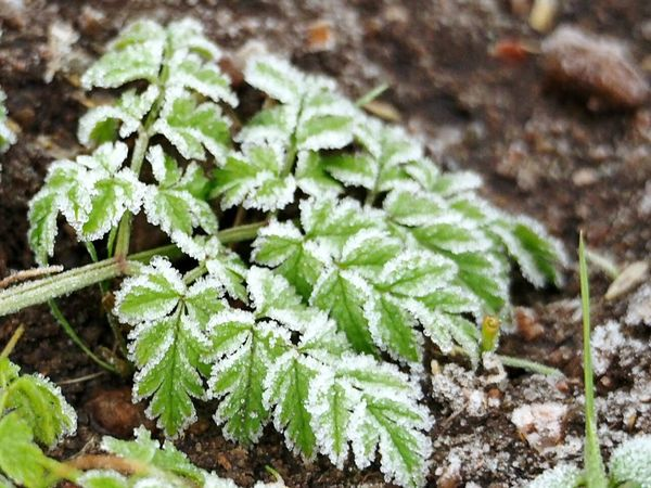 Growth Leaf Nature Green Color Plant Close-up No People Beauty In Nature Day Outdoors Fragility Freshness Winter Day Frozen Nature Winter Nature Frozen Structure