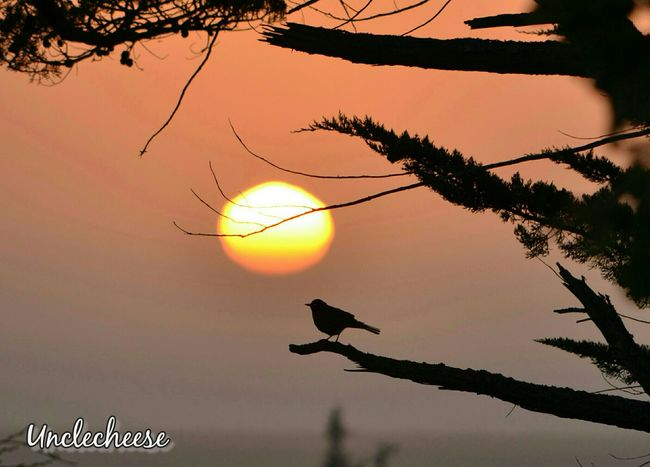 Lonesome Dove ~ Sunset Sunsetlover Sunshine 🌞 Sunset_collection Eyeemsunsets StreamzooVille Streamzoo Family Streamzoofamily This Is My Sky TheVille