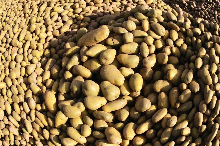 Full frame shot of raw potatoes