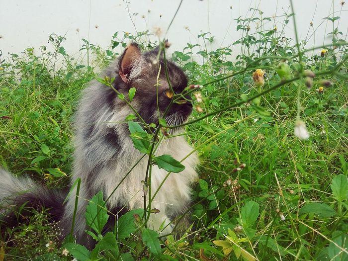 😸😸😸😸😸😸😸😸😸😸😸😸😸😸😸😸😸😸😸😸😸😸😸😸😸😸😸😸😸😸😸😸😸😸😸😸 Cat Photography Cat Lovers Cat The Moment Pet Portraits