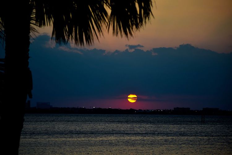Sunset last night was incredible! Landscape_Collection Beauty In Nature Night Sea Palm Tree Outdoors Sunset Nature Water Sunset_collection Sunset Silhouettes Sunsets River Colorful Florida Sunset Sunset And Clouds  Taking Photos Hello World Sun Landscape Sunset_captures Sundown