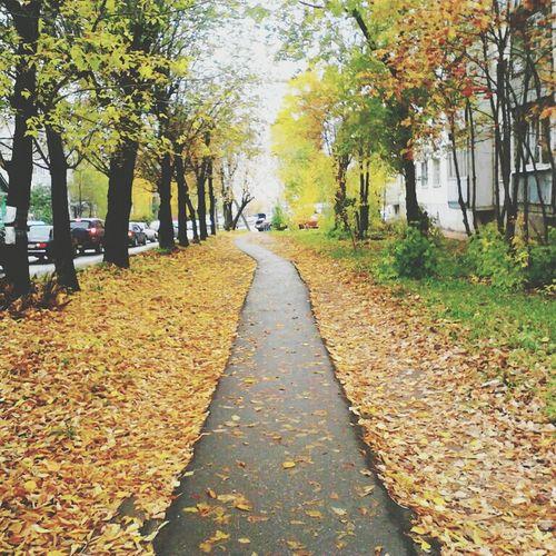 Autumn Colours Nature Photography