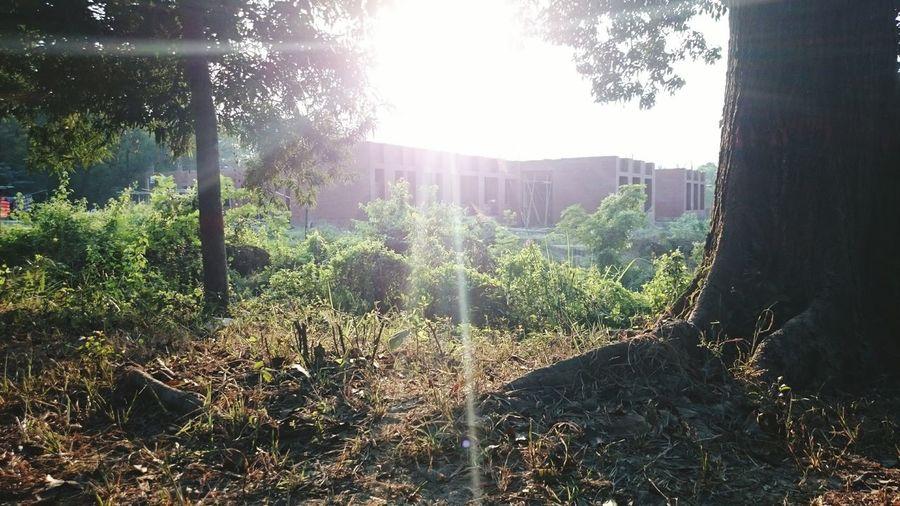 Ray of sunshine. First Eyeem Photo Sun Sunshine ☀ Light Hope Ray Randomshot Random Trees And Bushes Nature God's Creation Dazzling