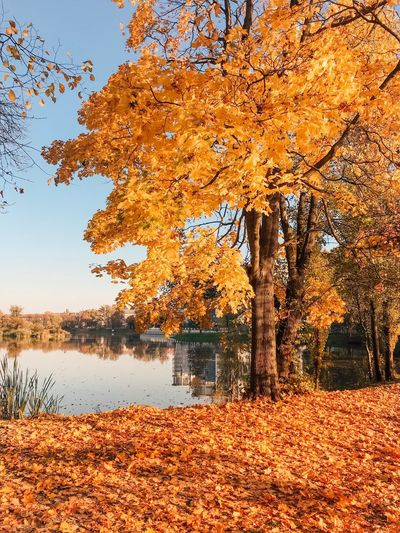 Water Tree Beauty In Nature Plant Tranquility Autumn Orange Color Nature Sky Lake No People Change Scenics - Nature Tranquil Scene Reflection Day Growth Branch Outdoors Leaves