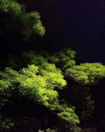 tree light Tree Close-up Green Color Plant