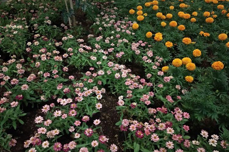 pink & orange flower Flowers,Plants & Garden Flower Head Flowerbed Summer Flora Vegetation Spring Uncultivated Blooming Plant
