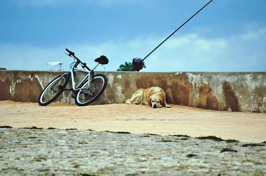 a day in the life fishing for a Living Fishing One Man Only Dog Sleeping  Dog Photography Biker Life Fishermen's Life Clifftop Portugal Oficial Fotos Colection EyeEm© Investing In Quality Of Life Breathing Space EyeEmNewHere