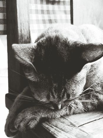 Sleeping cat Domestic Animals Pets Animal Themes Mammal One Animal Close-up Indoors  No People Day Catsagram Domestic Cat Cats Cats 🐱 Catoftheday Catsofinstagram Catlovers Catofinstantgram Catofeyem Animals In The Wild Long Goodbye Pet Portraits Black And White Friday
