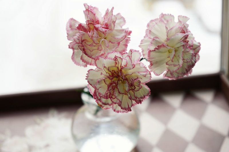 Carnation Flowers Bouquet Window Light SONY A7ii EyeEm Selects Flower Blossom Plant Flower Head Close-up Fragility Day Pink Color No People Indoors  Springtime Beauty In Nature Freshness
