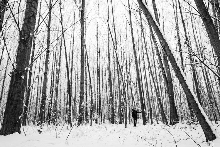 Snowcapped Mountain Bare Tree Scenics - Nature WoodLand Non-urban Scene Trunk Tranquil Scene Day Covering Tree Trunk Tranquility Forest Cold Temperature Winter Snow Outdoors Nature Beauty In Nature Plant Land Tree Blackandwhite Black And White Monochrome