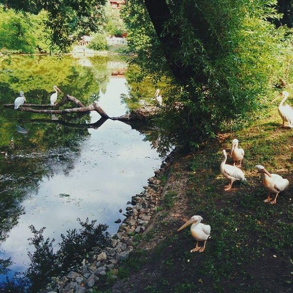 В зоопарку птах птахи птицы зоопарк зоопаркКиева київськийзоопарк