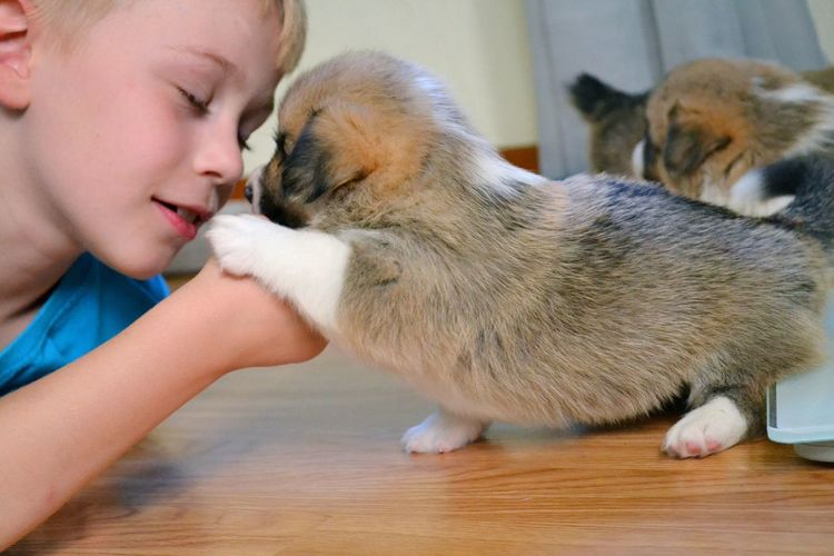 EyeEm Selects EyeEm Selects Pets One Animal Real People Eyes Closed  Domestic Animals Mammal Animal Themes Indoors  Childhood One Person Lifestyles Love Dog Friendship Bonding Close-up Day People Pup Puppy Corgi Pet Portraits