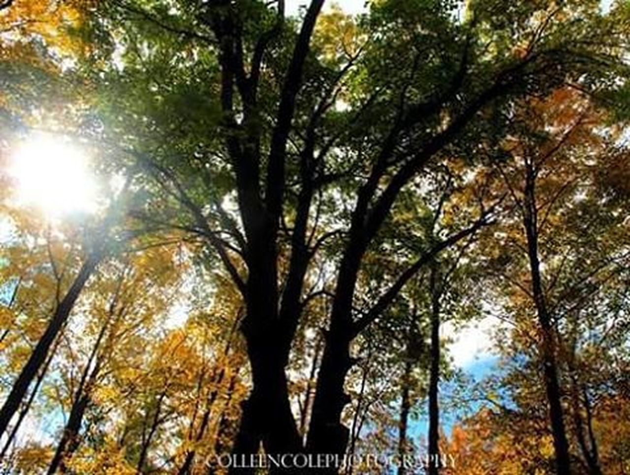 tree, nature, forest, low angle view, outdoors, beauty in nature, scenics, sunlight, branch, day, no people, sky