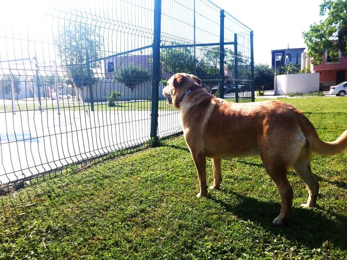 Dog Staring Dog Dogs Of EyeEm Dog❤ Dog Love Dogslife Doglover Dog Lover