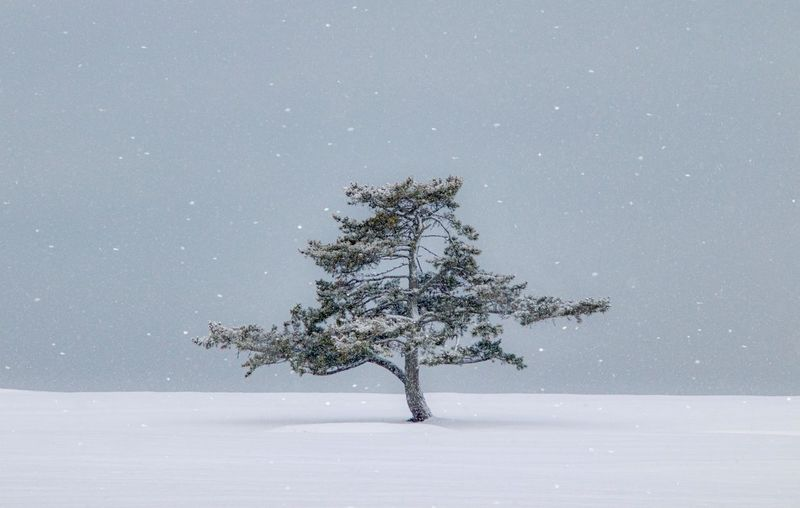 Tree on snow covered field